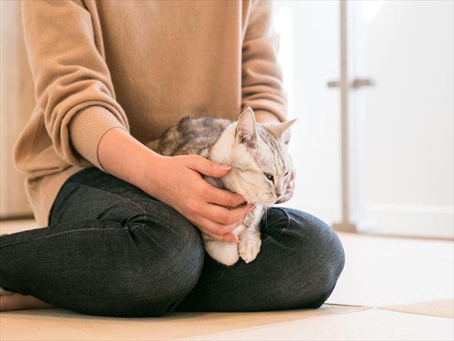 愛猫とくつろぐ